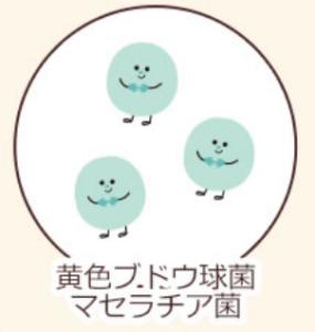 ハダキララのアクネ菌